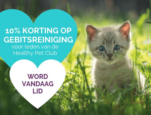 10% korting op gebitsreiniging voor leden van de Healthy Pet Club WORD VANDAAG LID