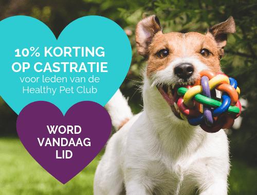 10% KORTING OP CASTRATIE voor leden van de Healthy Pet Club WORD VANDAAG LID