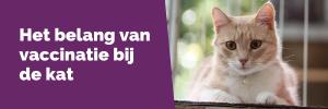 Het belang van vaccinatie bij de kat