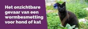 Het onzichtbare gevaar van een wormbesmetting voor hond of kat